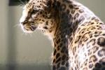 1ACD-zoo-168